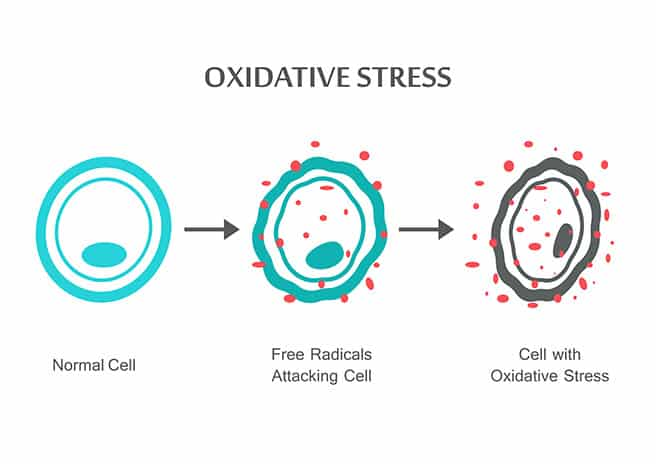 oxidative stress as it relates to ALS root causes